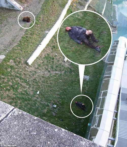 4-летний медведь разодрал одежду на своей жертве. Мужчина весь в крови и лежит в бессознательном состоянии в вольере медведя