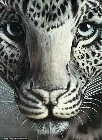 """Произведение боди арта под названием """"Бабочка"""": трейси нарисовал глаза леопарда на полу, в то время как спина модели вырисовывает остальные детали морды леопарда. Бабочка получилась из носа животного"""