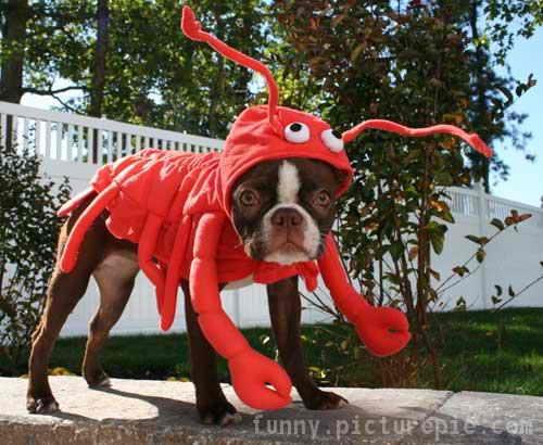http://skuky.net/wp-content/uploads/2009/11/dog-costumes17.jpg