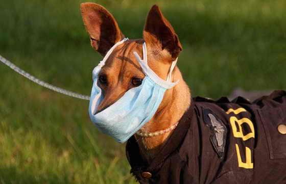 Собака в защитной маске против свиного гриппа H1N1 на улице в Эньши, провинции Хубэй, Китай