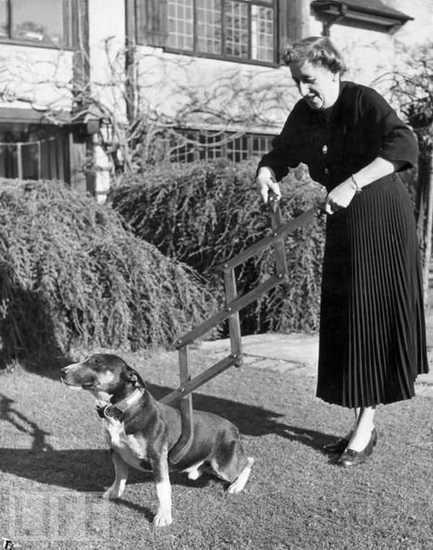 Оригинальное садистское устройство для сдерживания и дрессировки собак, главное, чтобы собака не отомстила
