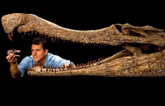 На фото от National Geographic Пол Серено демонстрирует огромную пасть и челюсти ископаемого динозавра-крокодила SuperCroc и голову окаменелого DogCroc