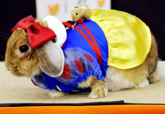 """Забавный кролик в костюме Белоснежки на модном для кроликов конкурсе """"Фестиваль кроликов"""" в городе Иокогама, префектура Канагава, в пригороде Токио, 15 ноября 2009 года. На праздник пришло около 8 000 любителей кроликов"""