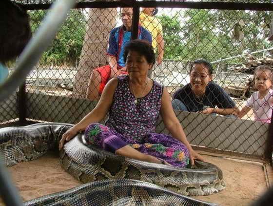 Огромная змея