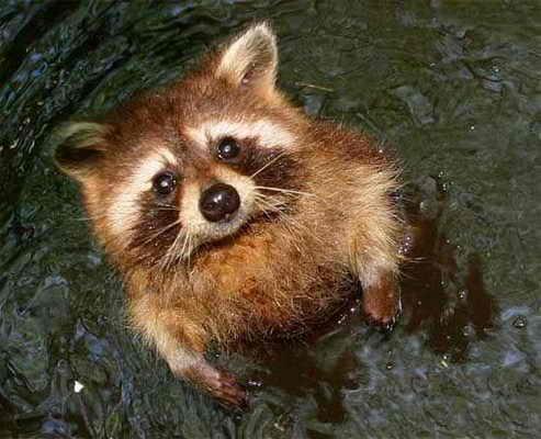 Помогите, спасите, у меня хвостик совсем промок