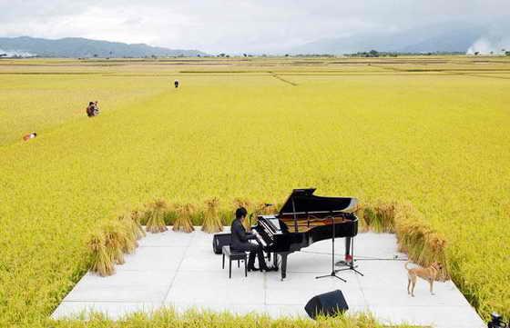 Тайваньский пианист Чэнь Гуань-юй (Chen Kuan-yu) исполнил концерт в центре рисового поля в Chishang Township, тайваньском округе Тайдун