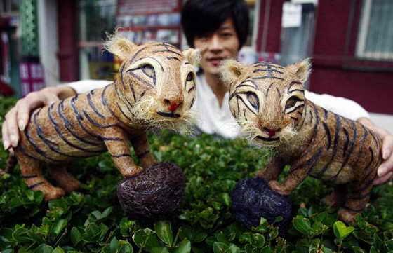 Парикмахер из Хуангксин, Китай, собрал 2,6 кг человеческих волос, чтобы сделать эти две скульптуры тигров