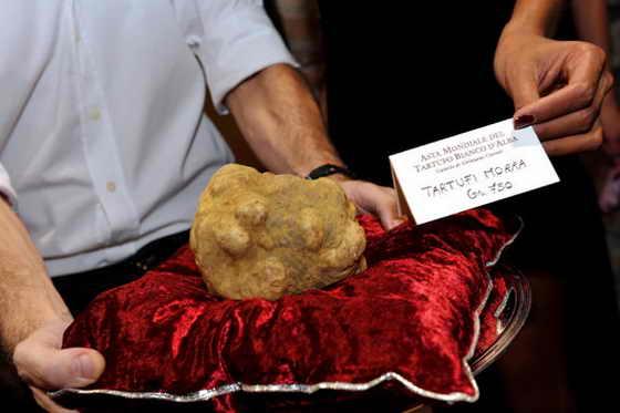 """Телеведущие представили 750-граммовый белый трюфель, проданный по рекордной цене - за 100 000 евро 8 ноября 2009 года во время аукциона в Гринцане Кавур, на 79-ом Фестивале белых трюфелей в Альбе. В региона Пьемонт, где расположена Альба, считается, что можно найти самые лучшие """"tartufo bianco"""" (белые трюфели) в мире"""