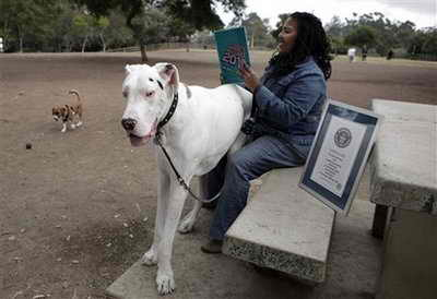 Самая большая в мире собака