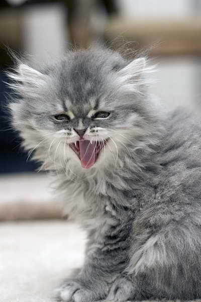 Коты фото очень смешные