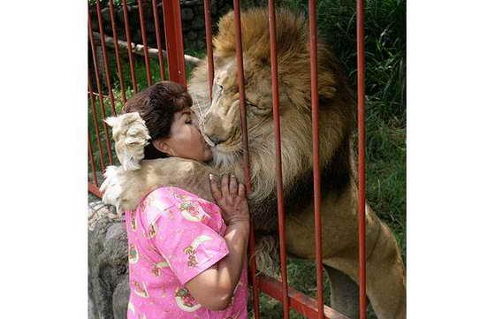 поцелуй льва