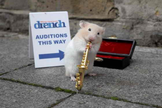 Исполнитель соло: Этот умный хомяк будет демонстрировать свой музыкальный джаз талант в рекламе