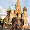 Собака Оскар — самый большой путешественник из мира животных