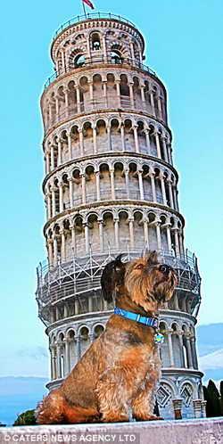 Путешественник Оскар на фоне Пизанской башни в Италии