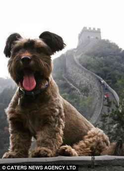 Смешной путешественник достиг и Великой китайской стены