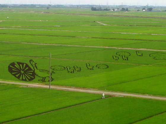 Рисовая уточка с утятами