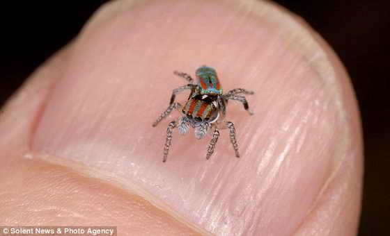 Мал, да удал: Длина красочного насекомого всего лишь 4мм