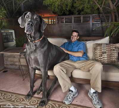 ...самой большой собаки в мире.