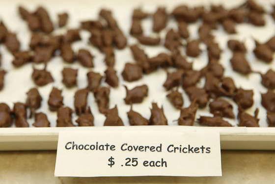 насекомые в шоколаде