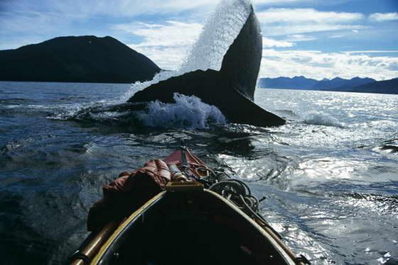 прыжок кита