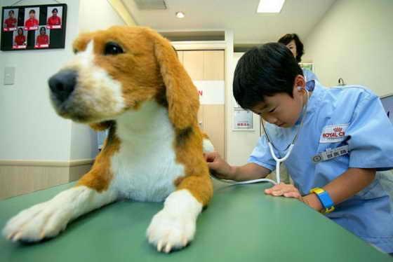Будущий ветеринар осматривает пока ненастоящую, игрушечную собаку