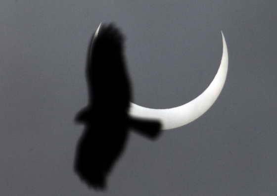 Птица летит на фоне солнечного затменич в Найроби, Кения
