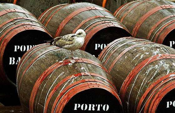 Вино из чайки