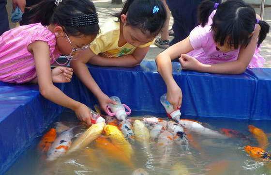 дети кормят рыб