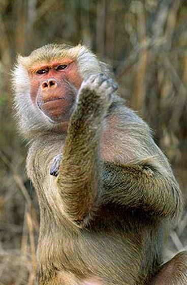Прикольная обезьяна