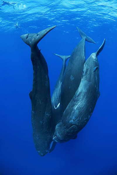 танец китов