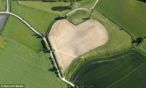 Расцвет любви: Луг в деревне Триттау, неподалеку от Гамбурга, Германия