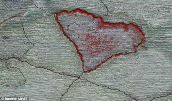 Паразитирующая любовь: Лишайники в заповеднике Audubon Corkscrew Swamp, Флорида