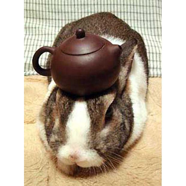 Кролик жонглер - герой бесселера