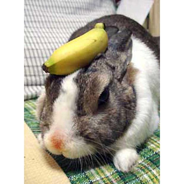 Кролик жонглер - звезда Интернет