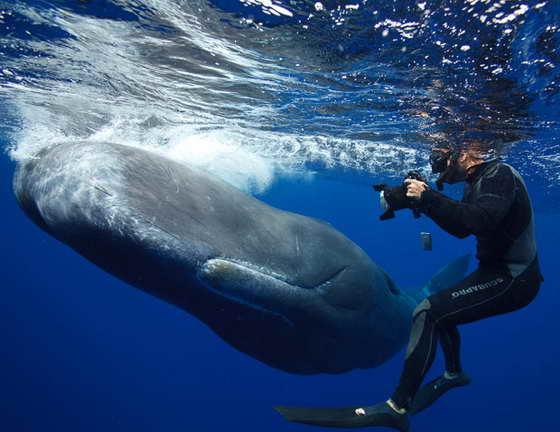 кит позирует