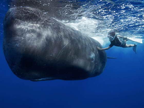 фотография кита
