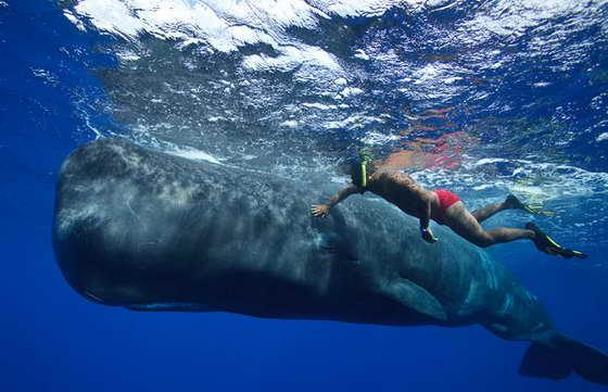 ныряльщик и кит