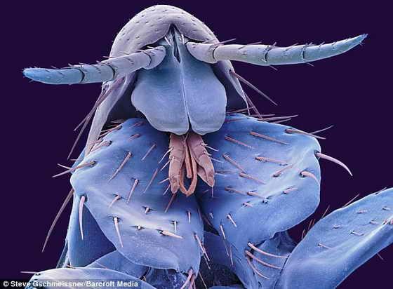 Интересные фото огромных насекомых в
