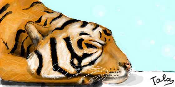 Всех с годом Тигра!
