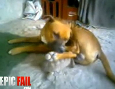 Собака и черепашка