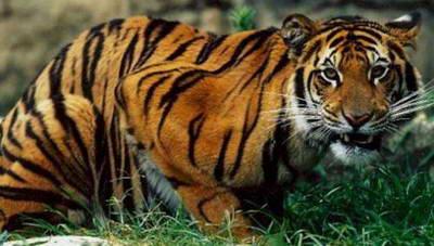 Самые опасные животные в природе