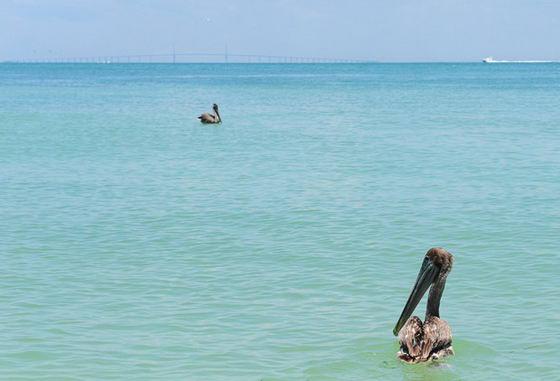 Последние фотографии разлива нефти у побережья Луизианы после катастрофы в Мексиканском заливе