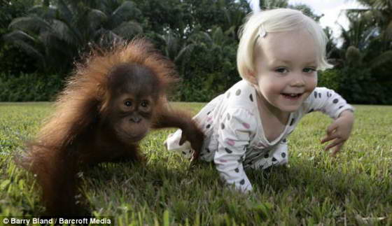 орангутанг фото прикольные