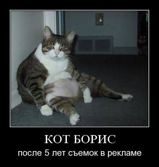 Как кота, кошка учила охотиться и 40 демотиваторов о коте.