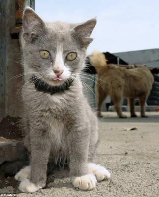 В России обнаружен необычный кот Лунтик с четырьмя ушами