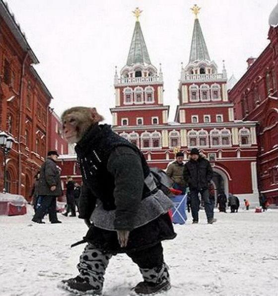 Приколы, которые возможны только в России