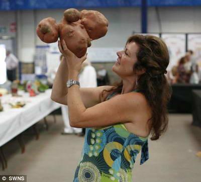 Самый большой картофель