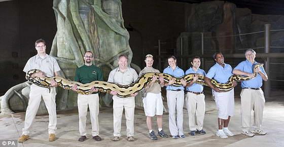Самая длинная змея