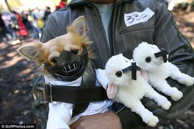 Сотни избалованных собак собрались на