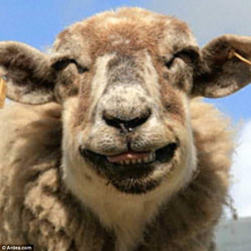 игры козы овцы
